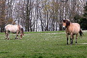 france holiday house horse riding